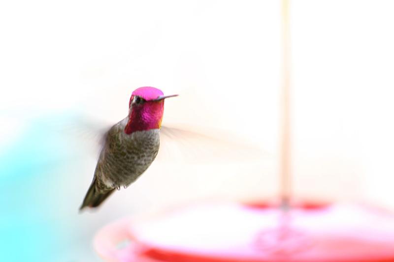 January 21st - Hummingbird