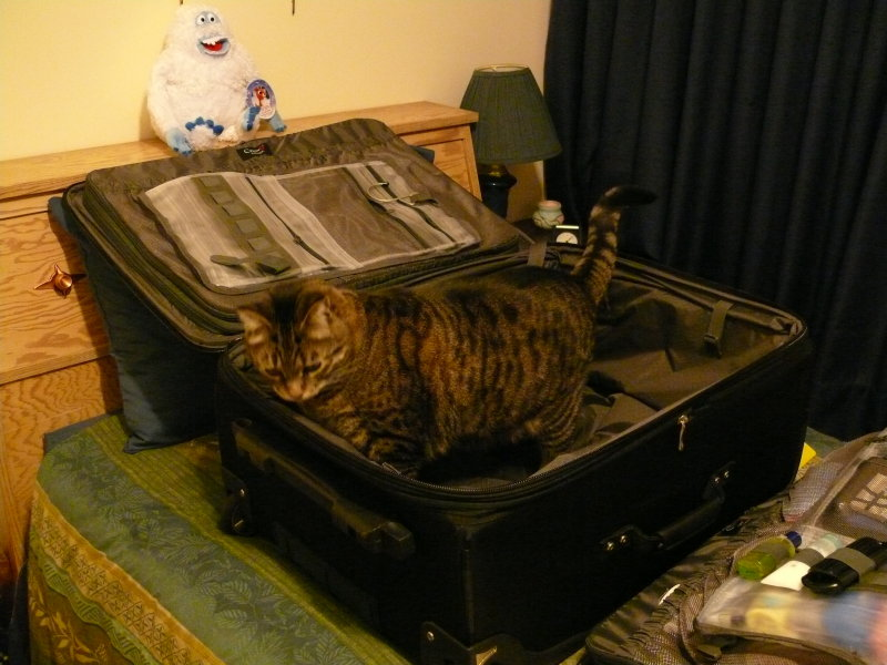 Bailey, as usual has to get in the suitcase as Im trying to pack