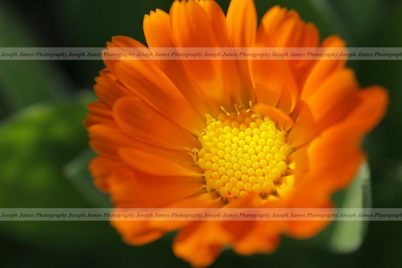 20090320 -- 135912 -- Sigma 70 / 2.8 macro @ f/5.6, 1/200, ISO 200