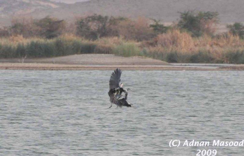 Buhairat_ul_Musk_Birds_013.jpg