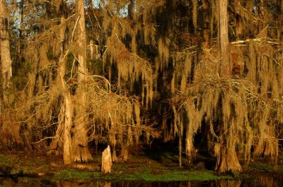Winter in the Swamp