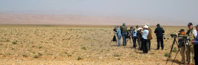 Non stop birding!! - The group in the Tagdilt plateu or steppes