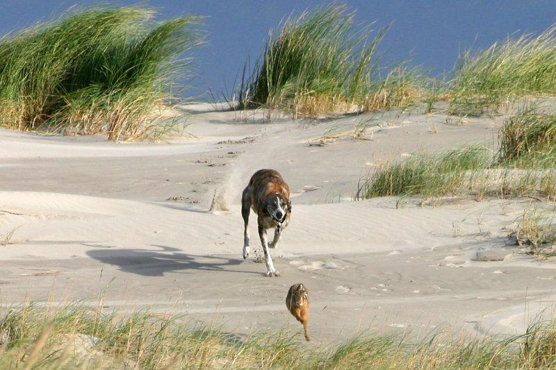 A hares last run