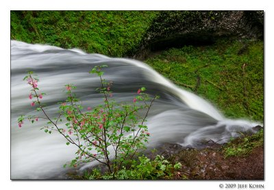 Silver Falls State Park Image Gallery
