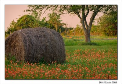 Wildflowers Photo Gallery