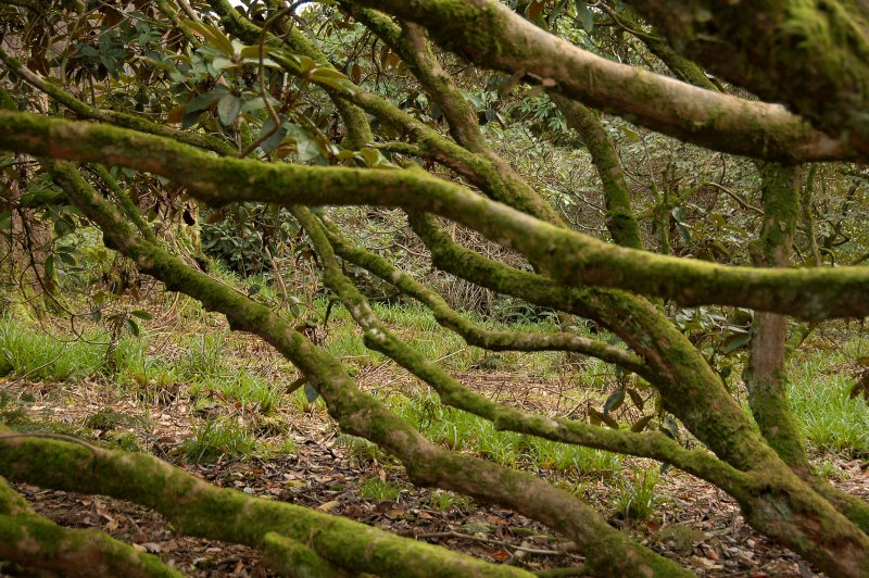 A maze of gnarled branches