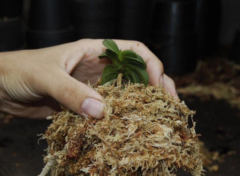 Use some more Sphagnum to cover the roots (not to thick)