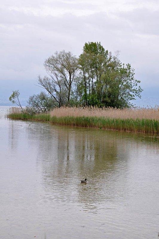 Lac Neuchâtel