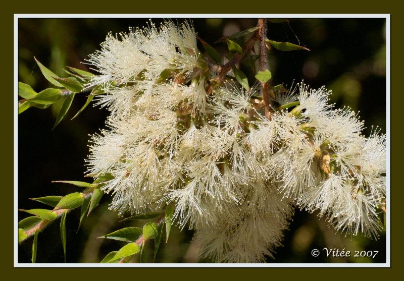 Pollen Feast I