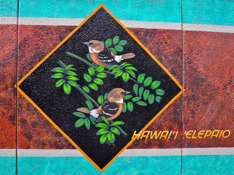 hawaii elepaio