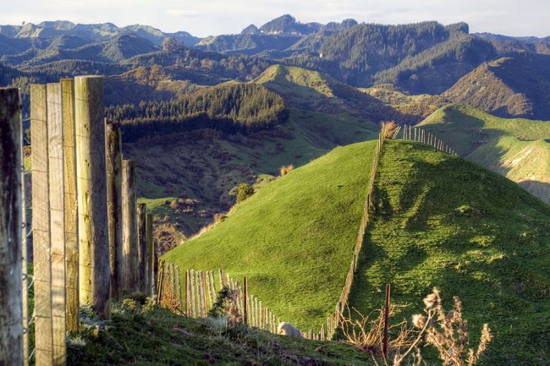 Fences in the Manawatu-Wanganui Region