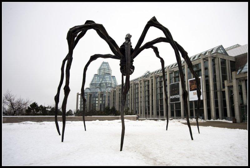 _Spider.jpg
