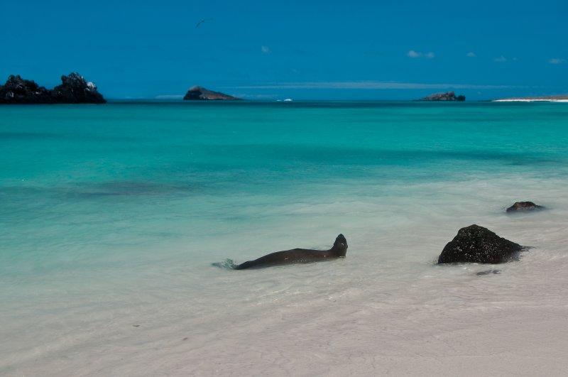 Sea Lion Enjoying the Water