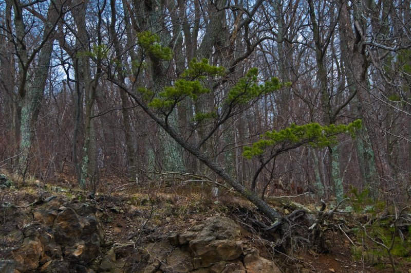 Tree Losing to Erosion
