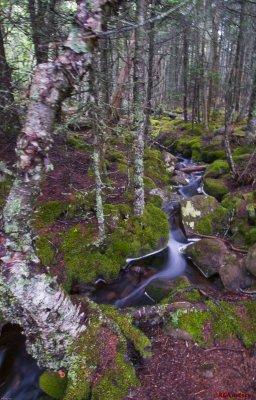 Quoddy Head SP - Cliff trail