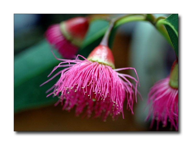 gumblossom.jpg