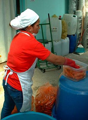 Cosecha Purhépecha- washing carrots