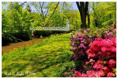 Spring at Menlo Park