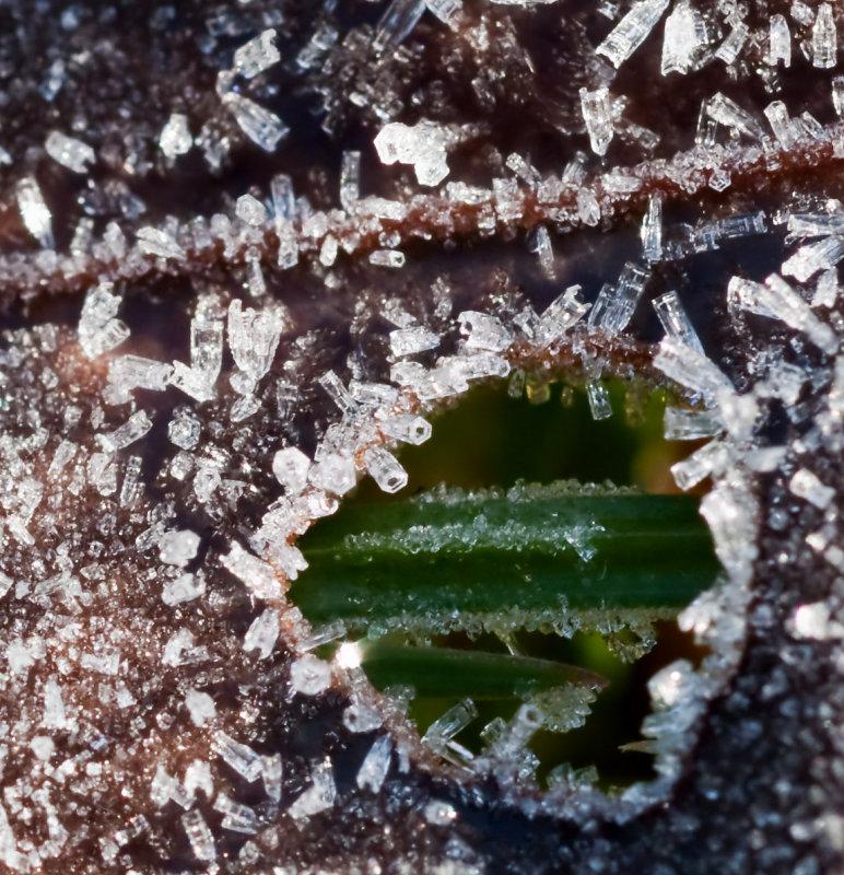 Ice_Crystals_16257_D5000.jpg