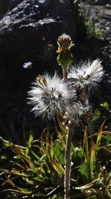<B>Seeds</B> <BR><FONT SIZE=2>Burney, California - September, 2008</FONT>
