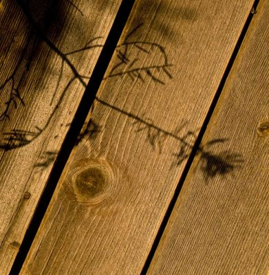 <B>Angles</B> <BR><FONT SIZE=2>Pondosa, California - September, 2008</FONT>