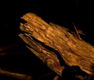 <B>Wood Study</B> <BR><FONT SIZE=2>Pondosa, California - September, 2008</FONT>