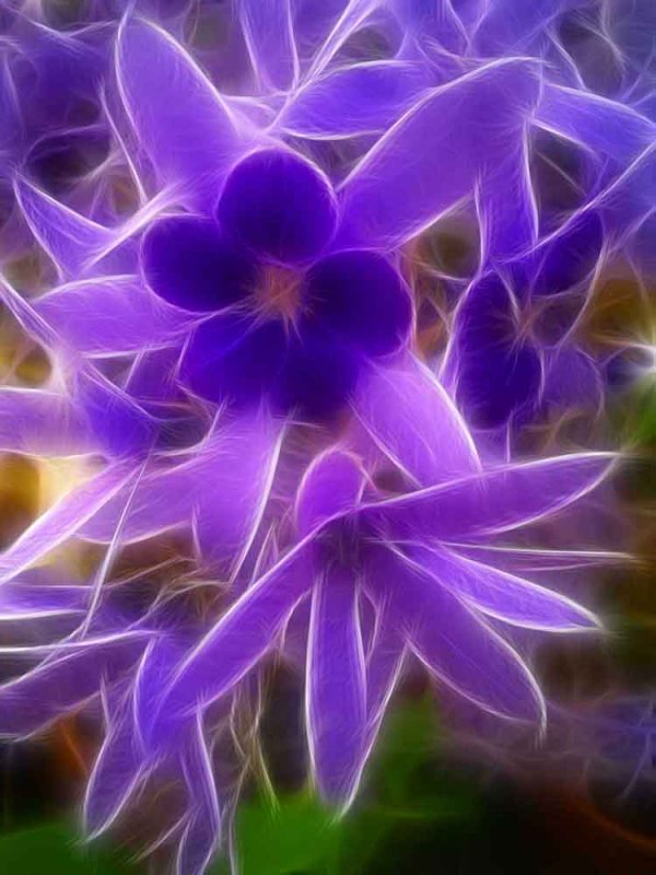 in lilac