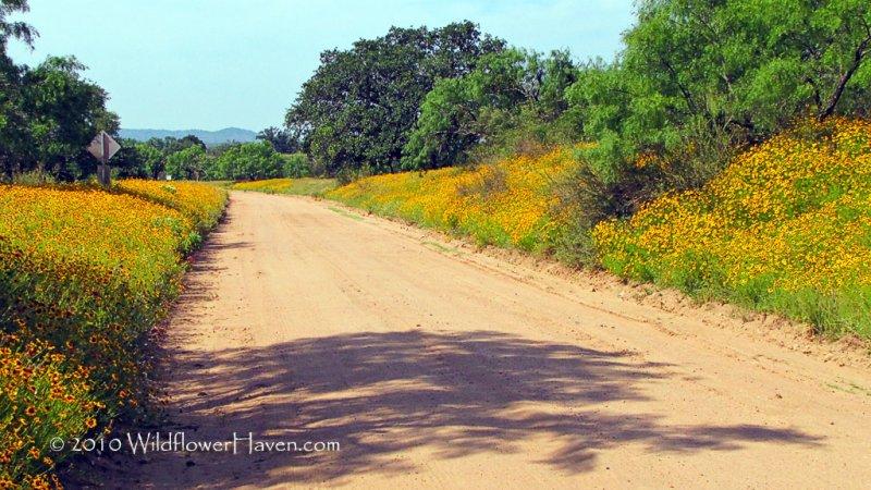 Coreopsis Road