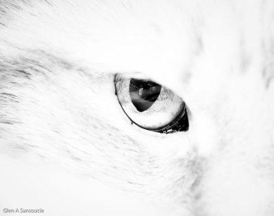 Day 136 - Cat's Eye