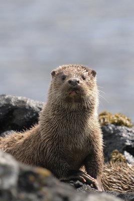 Otter photo:Brydon Thomason