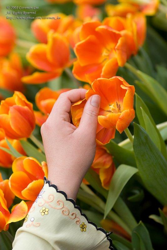 Tulip Picker