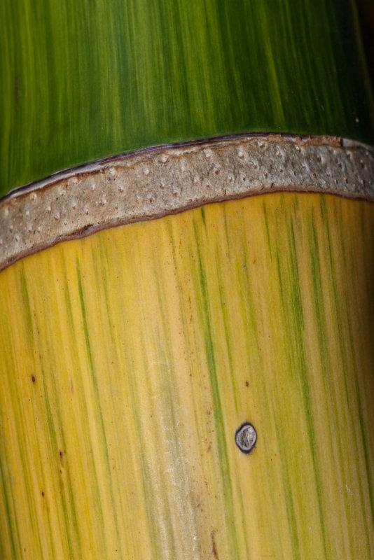 Ornamental bamboo </p>(P1000974)