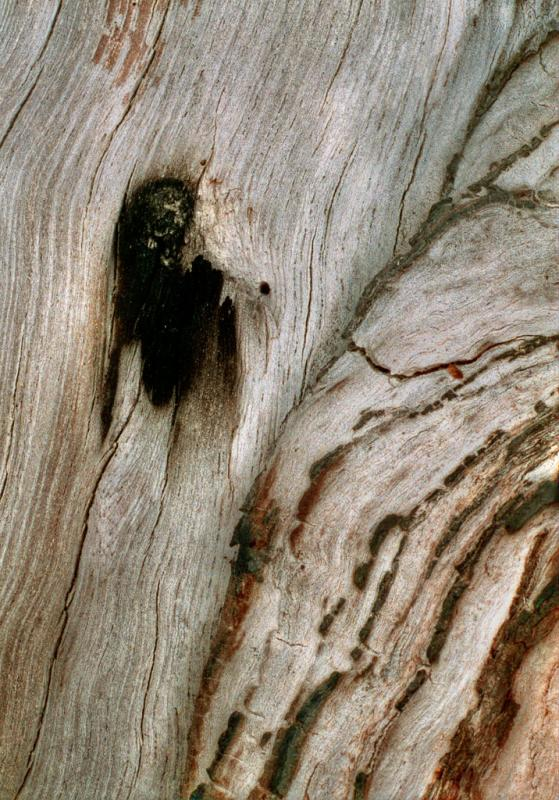 bark and burnt wood<p>cn002414