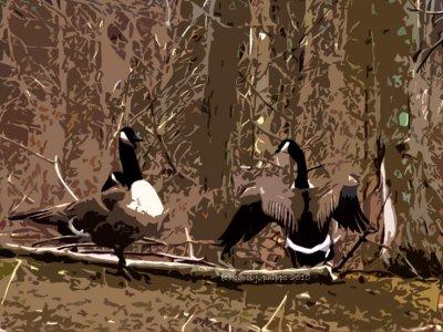 Goose Mating Ritual!