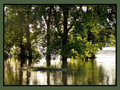 Flooding Days are Here Again!