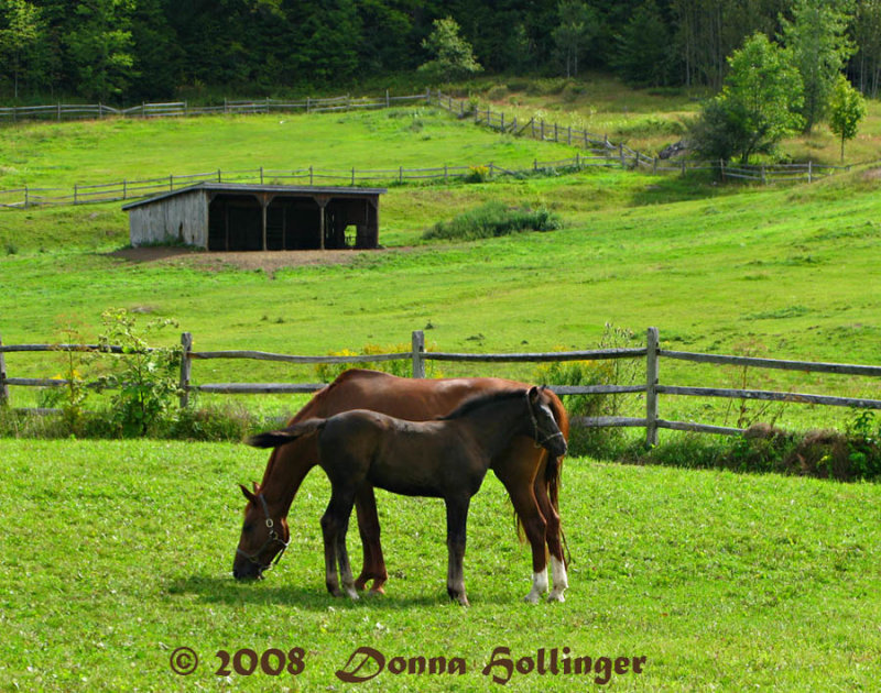 Huntington Mare With Colt