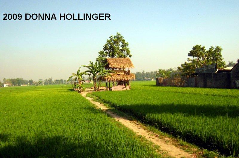 Farmers Rice Fields