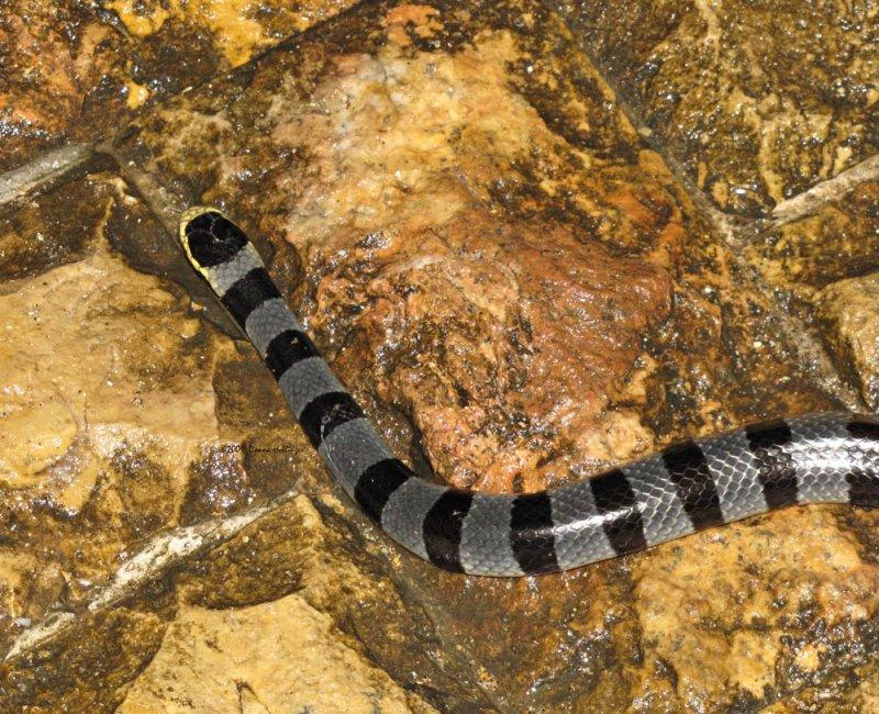 Snake Surprise in Sanur