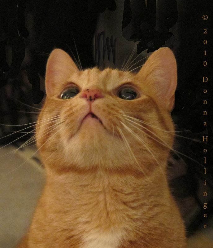 Noels Kitty