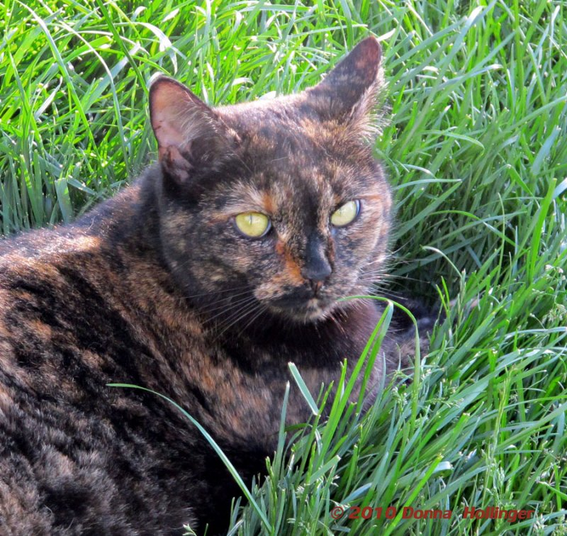 Pisa the (Adoptive) Mama Cat