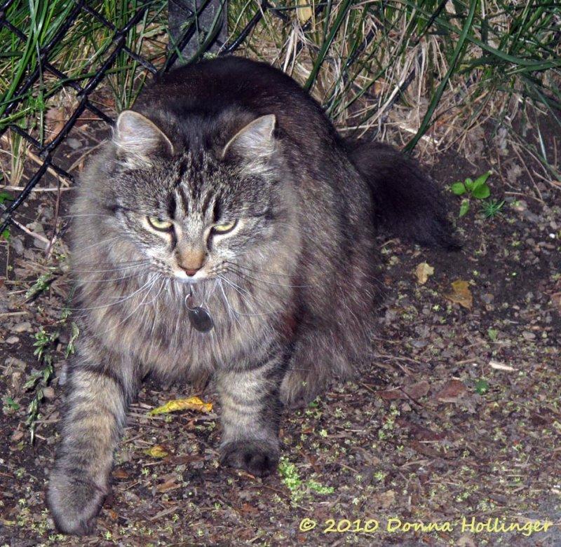 Johannas Kitty Mona