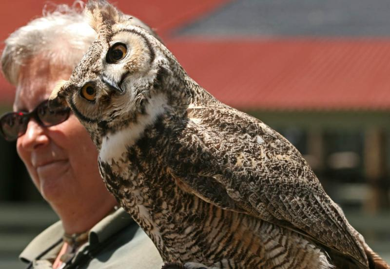 Alice & Great Horned Owl