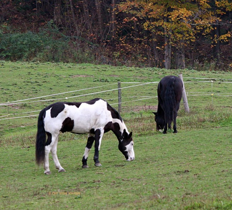 Black and White Painted Horse
