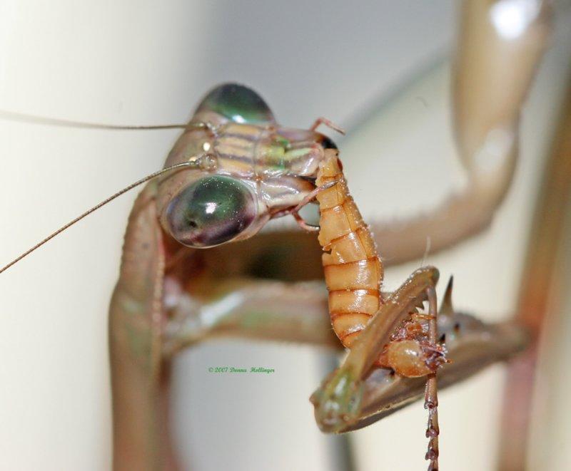 Squirming worm hanging onto Bony