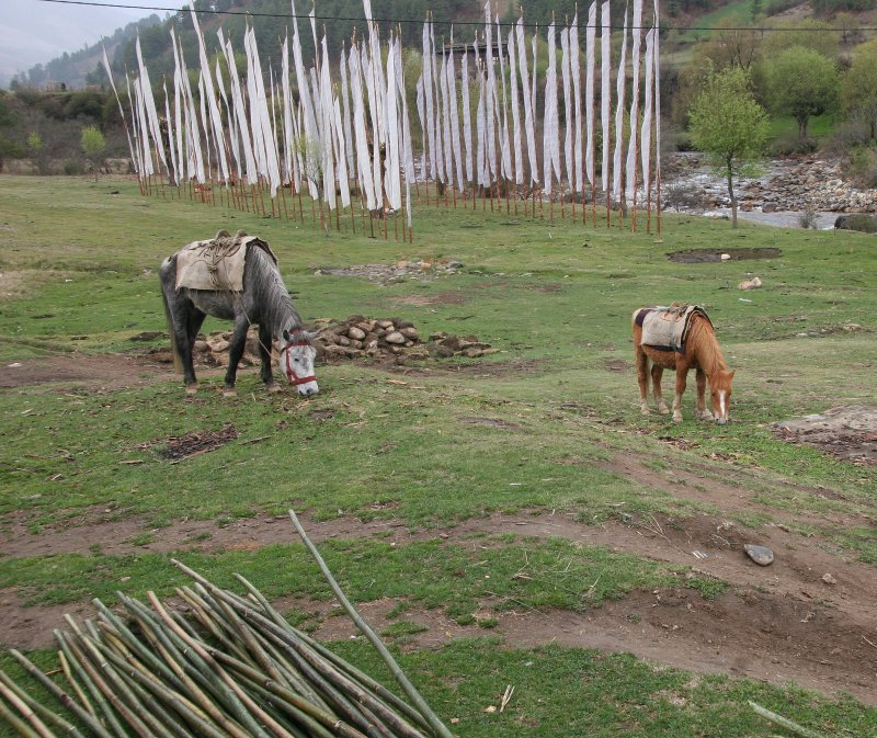 Trek Horses with Prayer Flags