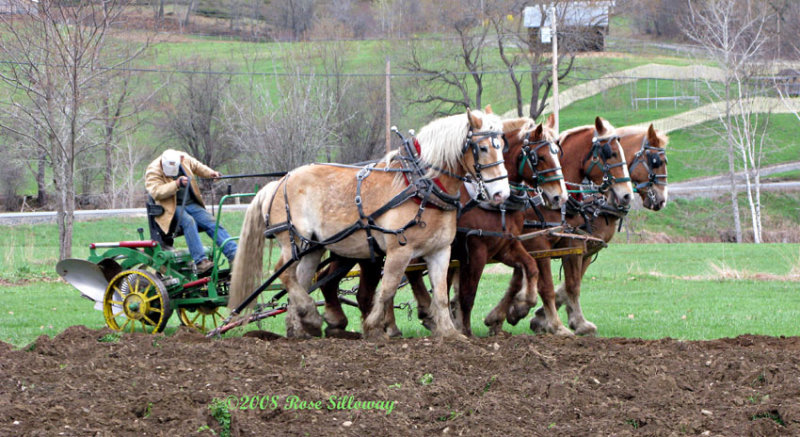 Earl and the Plow Team