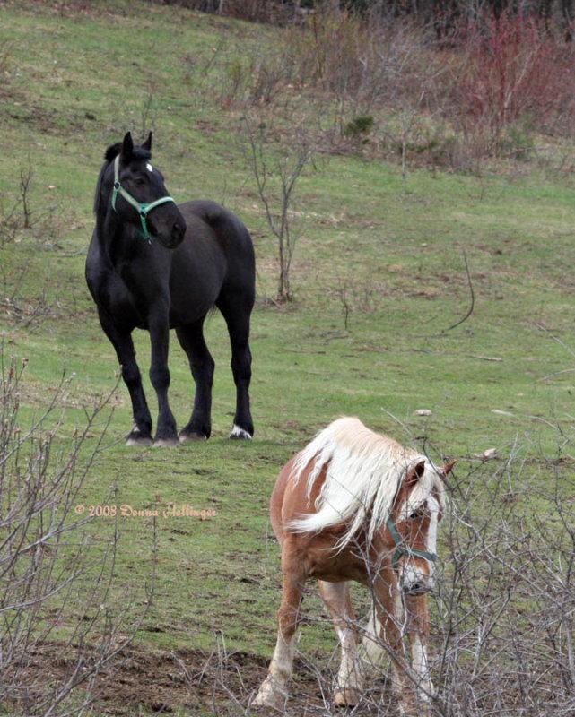 Two horses waiting