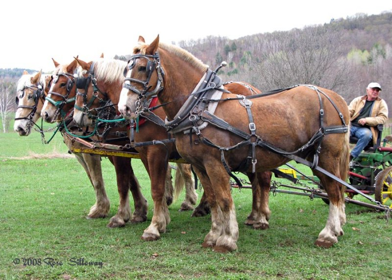 Earl and the plowing horses