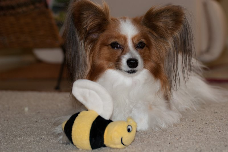 Chauncy and the Bee