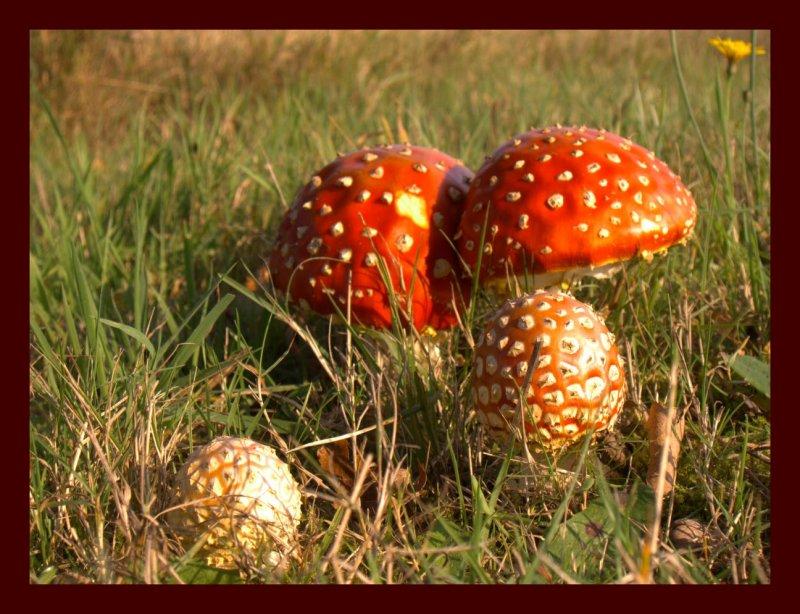 Fungus-2.jpg